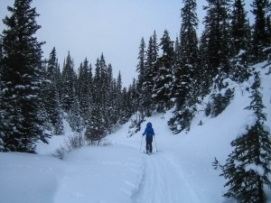 Lake Louise News Reviews Local Info - Alpina discovery review